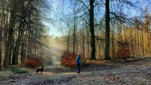 A dog walk in the sunshine at Bagley Woods