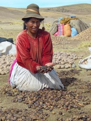 Mujer con tunta en las manos en Ilave, Puno, Perú, en 2008
