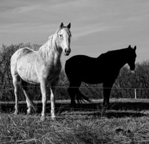 Dos caballos en el parque.
