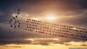 પક્ષીઓના જૂથનો ફોટો