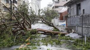 Las calles de la isla se encuentran llenas de árboles caídos.