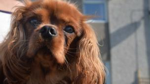"""A dog helped save a family of four by alerting them to an overnight fire at their house. A relative of the family said they were alerted by """"unusual"""" barking from their dog Bella."""