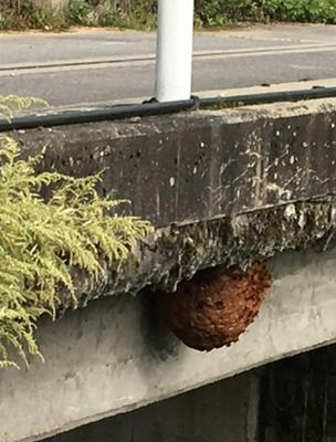 A close-up of the nest underneath the bridge