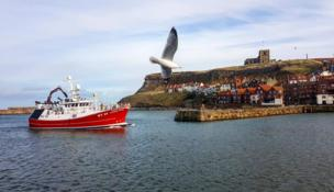 A seagull flies past a boat and town on the coast line