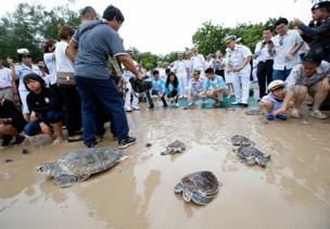 เพื่อให้เต่าเหล่านี้ได้อยู่คู่กับท้องทะเลไทย