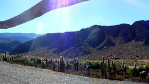 Cactus en Jujuy, norte de Argentina