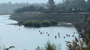 ชาวบ้านขะมักเขม้นหาสาหร่ายแม่น้ำโขง ห