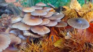 Una muestra otoñal de hongos, hojas de haya y castañas en un tocón