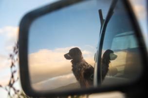A dog in a car mirror