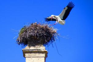 A large bird with a nest on top of a chimney