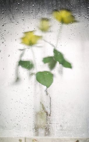 زهور عبر نافذة قطار