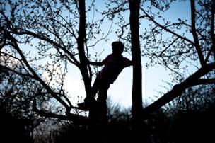 Niño en un árbol