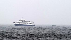 Observadores de ballenas
