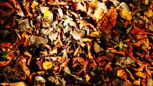 Leaves in Cothill Woods