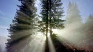 Light through the trees