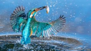 પાણીનો ઘૂમરાવ અને માછલી પકડતા પક્ષીનો ફોટો