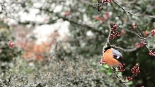 A bird in a Colwyn Bay garden