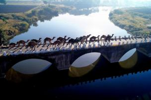 A caravan of camels crosses a bridge