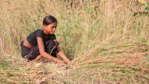 Cutting grass in the fields