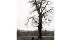 شجرة قديمة