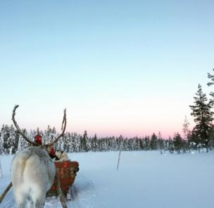 A pink tinged sky in Lapland