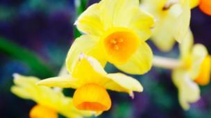 Spring flowers in Abingdon