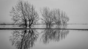 Trees in the fog, reflecting in the flooded fields alongside the River Severn near Welshpool, Powys