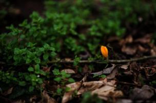 Un botón naranja entre hojas verdes