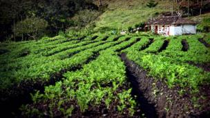 Hileras de cultivo de papa junto a una casa tradicional en el Carmen de Viboral, en Antioquia, Colombia