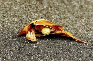 Snail inside a leaf