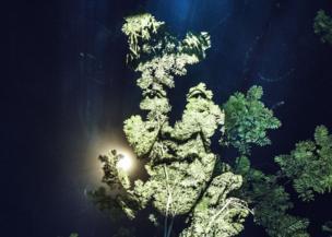 صورة طيفية في الغابة