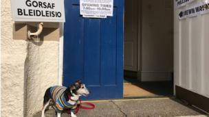 Lucy the dog at a polling station