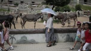A North Korean woman walks past by a donkey pen at the newly opened Pyongyang Central Zoo in Pyongyang, North Korea, Tuesday, Aug. 23, 2016.
