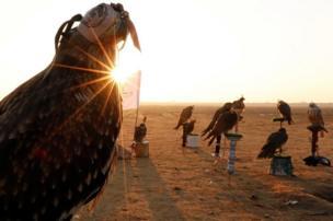 اصطفت الطيور الجارحة قبل شروق الشمس استعدادا ليوم الاحتفال.
