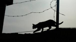 قطة تسير أعلى سياج