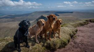 Four dogs on Pen y Fan in the Brecon Beacons