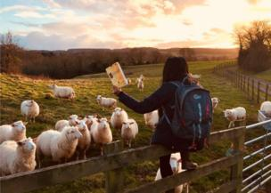 A woman reads to sheep