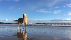 Layla the dog on Barry Island