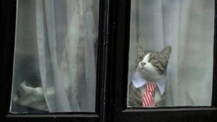 แมวของนายจูเลียน อัสซานจ์