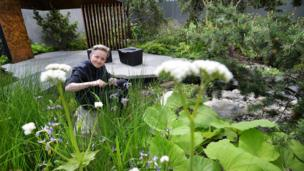 Charlotte Harris, the designer of the Royal Bank of Canada garden, works on final preparations