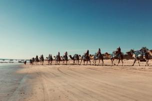 Camels on a beach