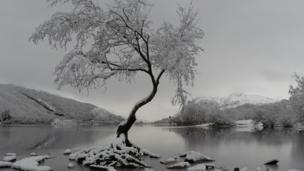 "The ""famous lone tree"" in Llanberis, Snowdonia"