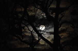 La luna a través de los árboles