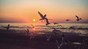 Rachel Platt captured the seagulls at sunset at a beach in Prestatyns in Denbighshire