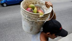 A man carries a bucket full of mangoes after plucking them from a tree in Caracas, Venezuela.