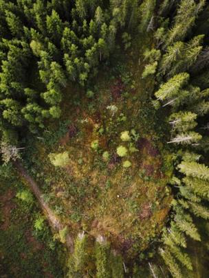 Conjunto de árboles plantados para el proyecto Biblioteca Futura.