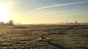 Elvis the dog on Wolvercote Common in the early morning