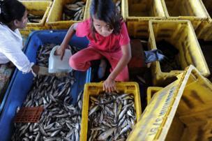 บางส่วนเป็นแรงงานเด็ก ในภาพเป็นเด็กหญิงชาวพม่าคนหนึ่งกำลังคัดแยกปลาที่ท่าเรือแห่งหนึ่งทางภาคใต้ของไทย