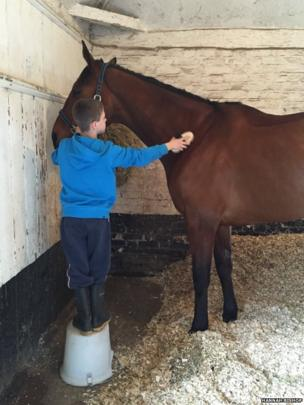 A picture of a horse being groomed by a boy wearing a blue jumper, posted on Twitter by Hannah Bishop, as part of the #blueforBonnie campaign