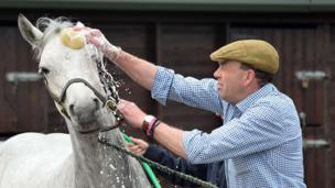 A horse getting a sponge wash by a man wearing a flat cap